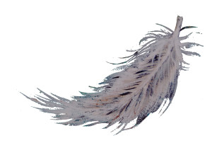 Feather_Closeup