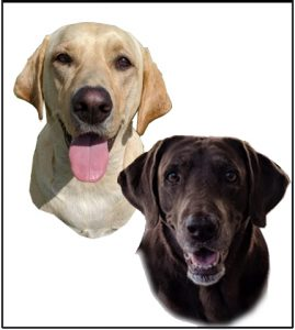 artwork of dogs
