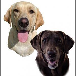 artwork of dogs