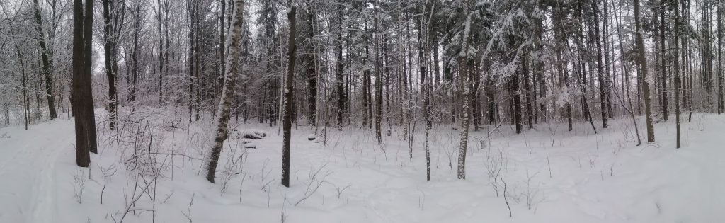 my woods after a snowfall