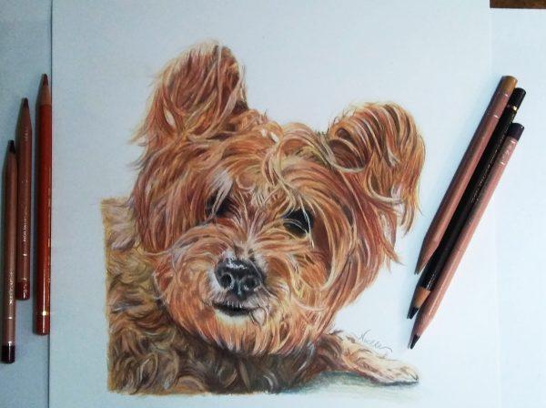small dog drawing