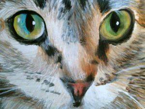 closeup of cats face art