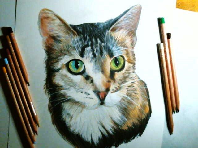 cat portrait in colored pencil