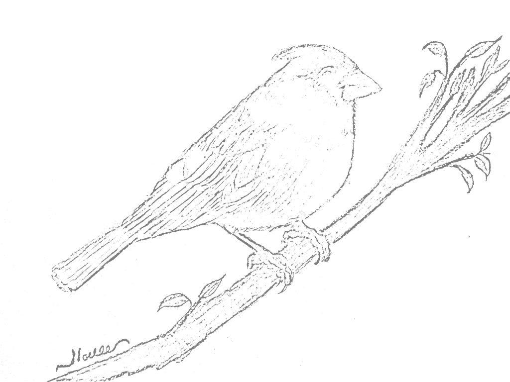 cardinal coloring page