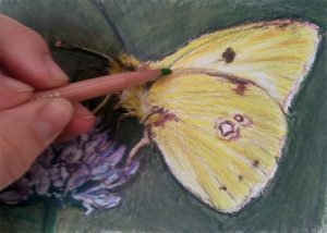 drawing a yellow butterfly