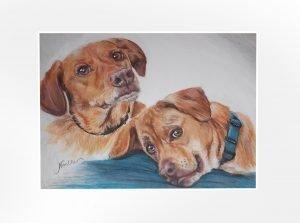 2 dogs portrait